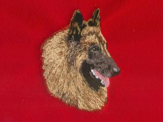 Red Sable Belgian Tervuren