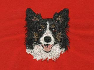 TriColored Border Collie Head