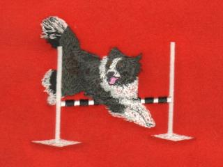 Border Collie Over Bar Jump