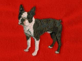 Boston Terrier Body