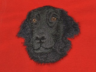 Flat Coated Retriever, Head