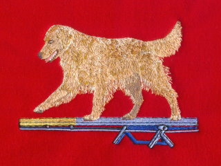 Golden Retriever On Agility Teeter Totter