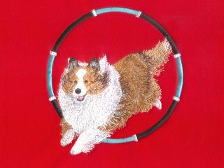 Shetland Sheepdog Thru Hoop