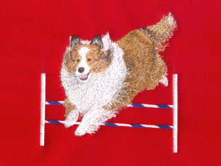 Shetland Sheepdog Over Jump