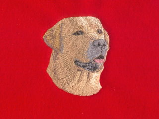 Yellow Labrador Retriever Head