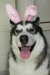 Wyatt The Bunny
